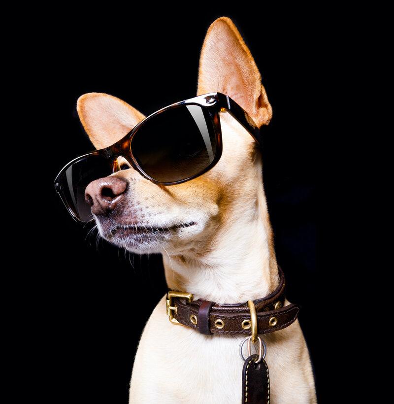 Decentralized Dog